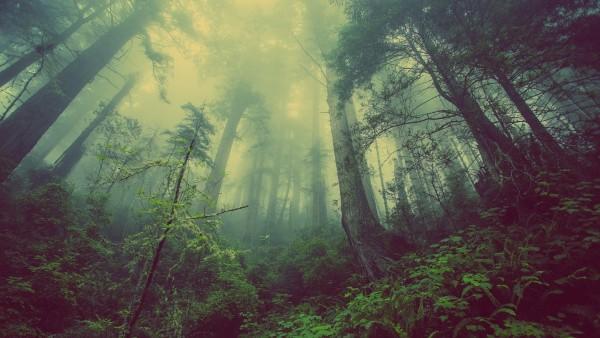 Forêt de Bébour-Bélouve - La Réunion